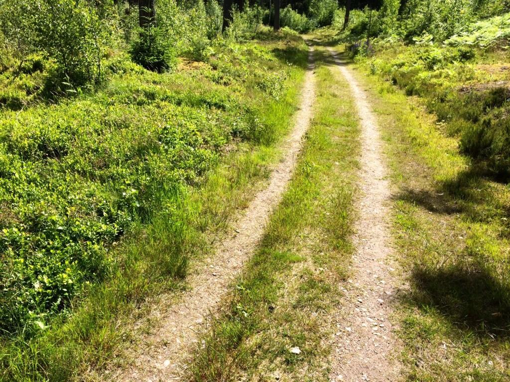 Gräsväg